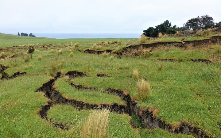 Cracks in the land at Kekerengu.