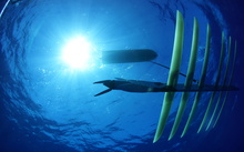 "The solar and wave powered ""Wave Glider"" from US developer Liquid Robotics."