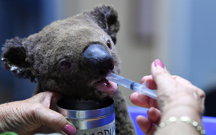 Australia's wildlife carers set to work around the clock over Christmas