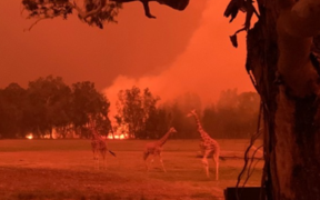 Zookeeper Chad Staples took this photo of Mogo Zoo surrounded by the Australian bushfires in New South Wales on 1 January, 2020.