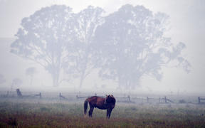 A horse seen through dense smoke from a bushfire on a farm in Eden, in New South Wales.