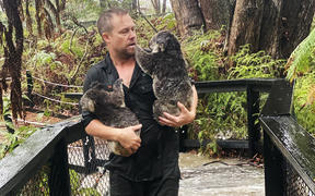 A staff member at the Australian Reptile Park in Somersby, 50km north of Sydney, carrying koalas during a flash flood.