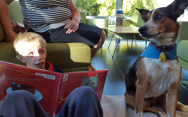 Theo de Heer, 8, reading to Poppy at the South Library in Christchurch.