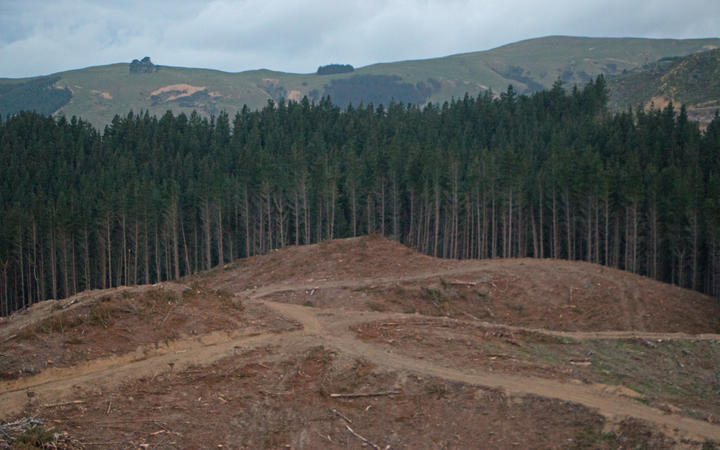 Pine trees are harvested on a hillside in southern Hawke's Bay