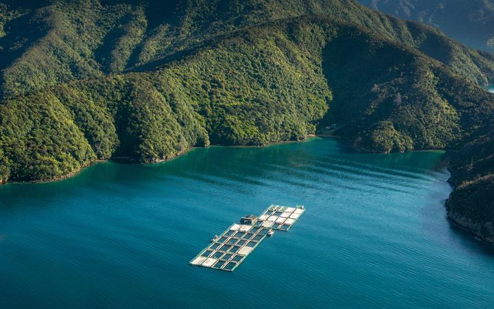 New Zealand King Salmon's Clay Point salmon farm in the Tory Channel.