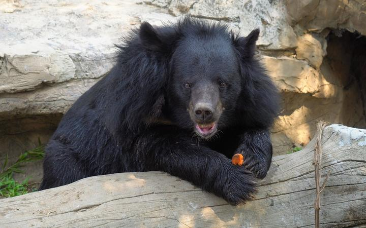 Woman charged with importing illegal bear bile crystals