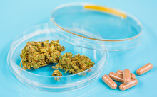 A petri dish contains medical cannabis, next to a small pile of pills (file).