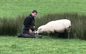 Roger Barton on his farm during lambing season.