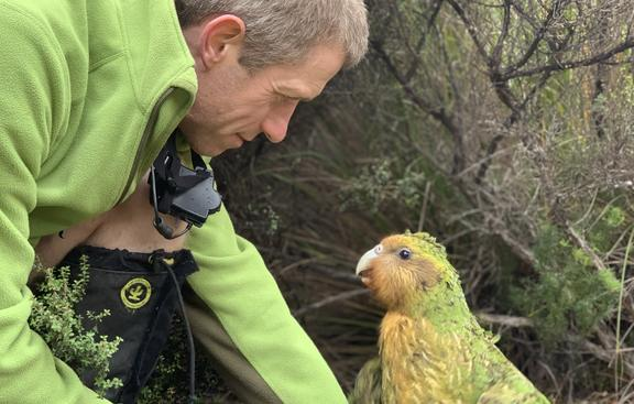 Andrew Digby with a kākāpō called Sinbad, who has important Fiordland genes.