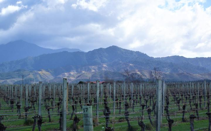 "Increasing numbers of plantings in the ""low vigour"" old clay soils on the hillside slopes of the southern Wairau Valley are producing high-quality pinot noir and chardonnay plantings. (Photo of Wairau Vineyard"