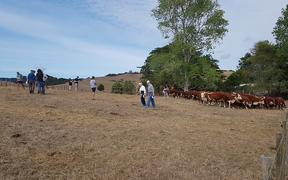 Visitors to the NZ Hereford Conference 2020.