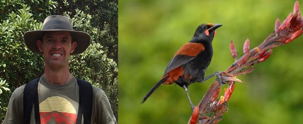 Kevin Parker and North Island saddleback