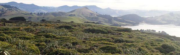 Looking across Otago Peninsula from Sandymount (image: A. Ballance)