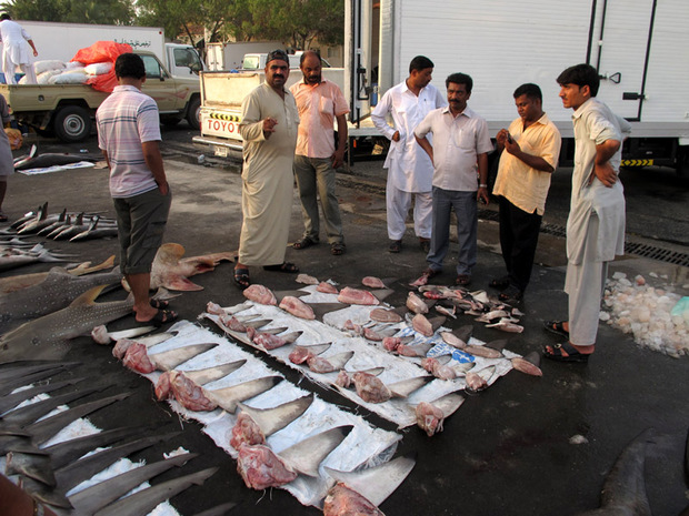 Shark fin buyers, Dubai fish market