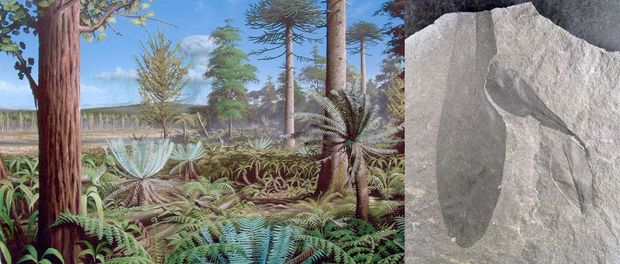 panorama fossil plants