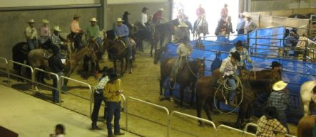 Lining up at the Manfeild-Feilding Rodeo