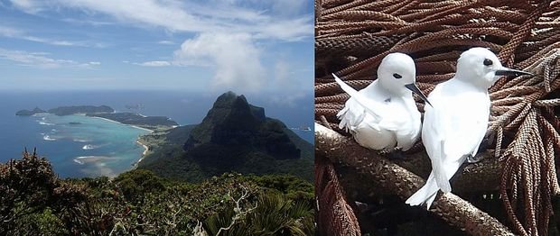 Lord Howe Island seen from summit of Mount Gower, and pair of white terns