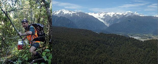 Jim Livingstone carries a rowi egg in a heated and padded chilly bin (left), and view across South Okarito Forest to Southern Alps