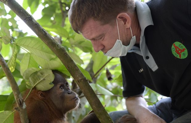 Ian Singleton with orangutan