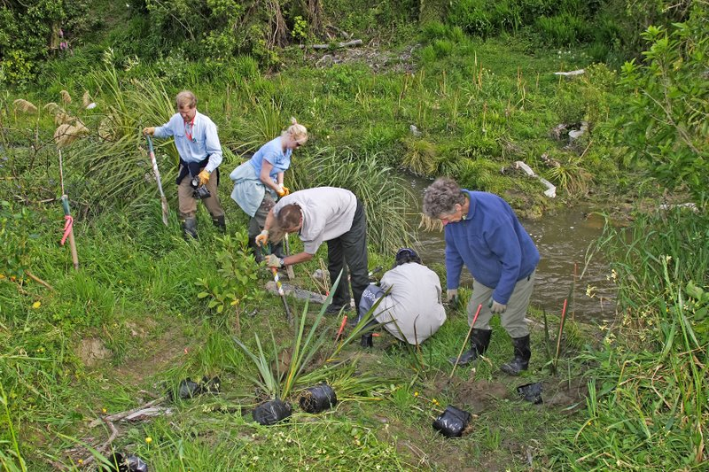 Volunteers planting at Hull's Creek