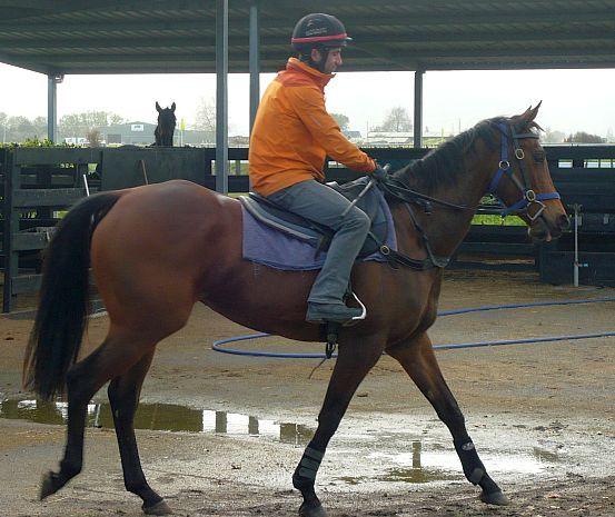 jockey and horse pike racing stables cambridge mcrae
