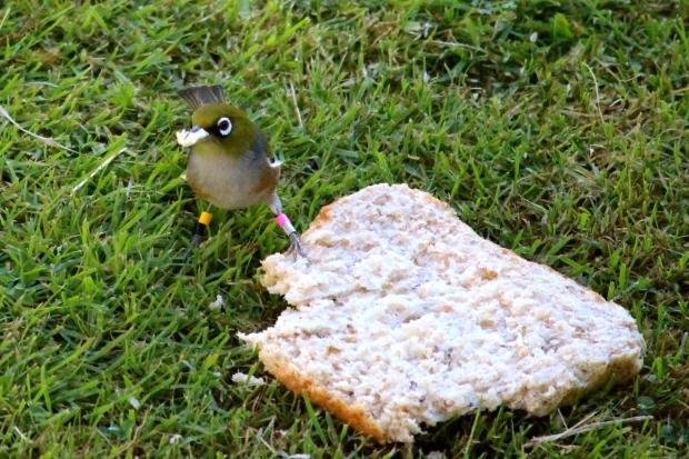 Birds copyright Josie Galbraith