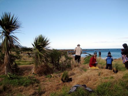Places for Penguins first community restoration day at Tarakena Bay on the Miramar Peninsula.