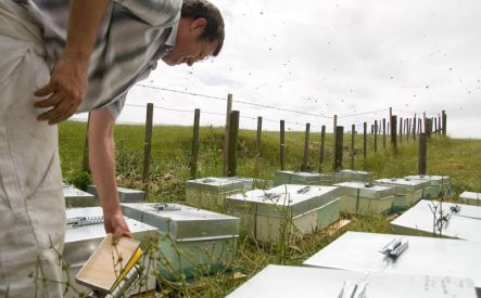 Placing hives2