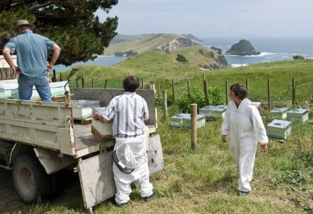 Placing hives