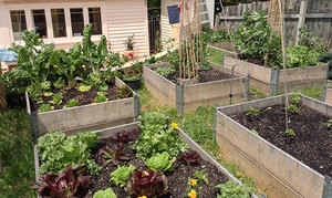Garden with addition of raised beds and vegetables
