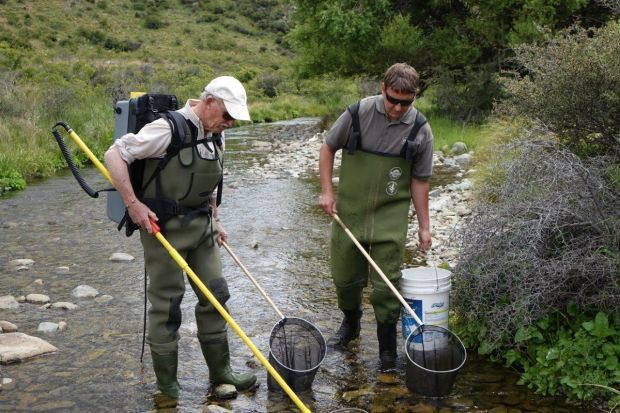 Graeme Hughes and Jayde Couper electro fishing a stream in the Waitaki Valley Photo RNZ Ian Telfer