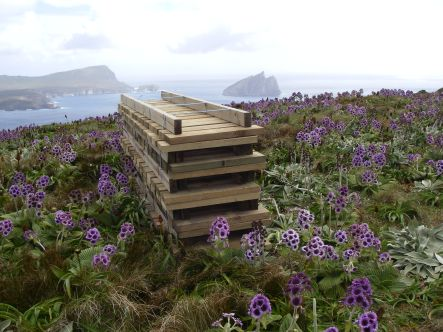 Timber for boardwalk on subantarctic Campbell Island