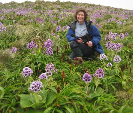 Alison Ballance amongst flowering megaherbs on Campbell Island.