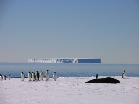Penguins and seals at the edge of sea ice in Antarctica