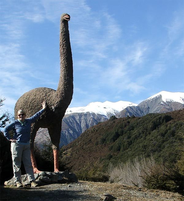 Moa southern alps