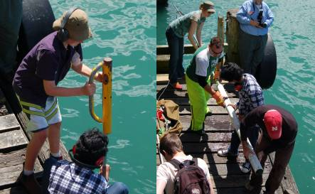 Geology summer school students collecting a sediment core from the Petone Wharf