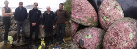 Paua survey team, and paua with green plastic tags glued on their shells