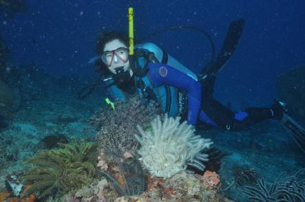 Producer Alison Ballance dives on the Great Barrier Reef - coral reefs are expected to be impacted by rising levels of carbon dioxide in the ocean