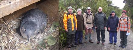 little penguin in nest box, and penguin team on Matiu/Somes Island