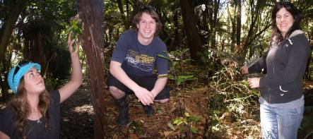 Catherine Bryan wityh a climbing fern, Kieran Miller with an understorey seedling he has planted, and Emma Coleman with a young kahikatea seedling