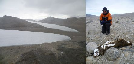 Southern Dry Valleys of Antarctica and Jonathon Banks with a mummified crabeater seal