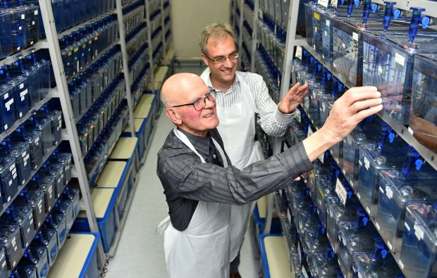 Dr Peter Campbell right visits the Otago Zebrafish Facility with former University of Otago pathology department head Dr Colin Geary