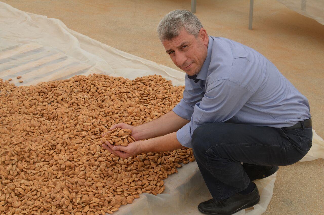 Saleem Abu Ghazaleh fair trade director of the Palestinian Agricultural Relief Committee