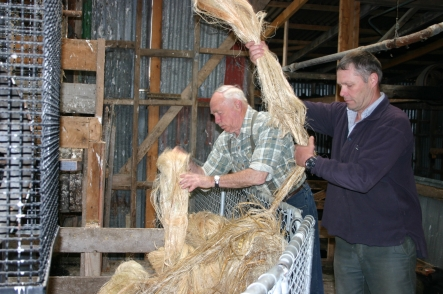 Des and his son Vaughn Templeton sort hanks of stripped and sun-bleached flax fibre for scutching.