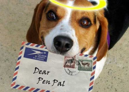 Dog holding a letter in it's mouth.