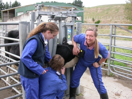 Jenny Weston examining a cow with some vet nursing students.