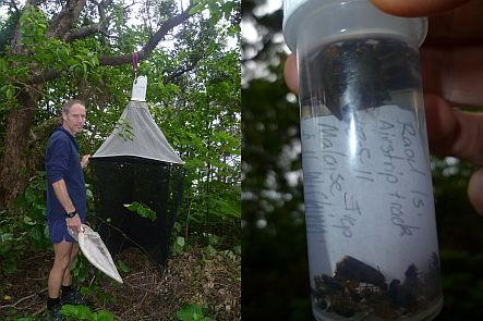 Warren Chinn and a malaise trap, and insects caught in trap