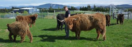 Karl Kohle with some of his Highland Cattle