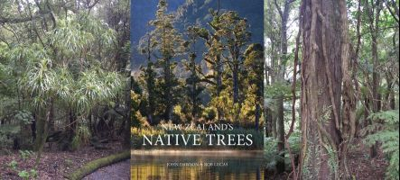 Dracophyllum tree, book cover and woody vines
