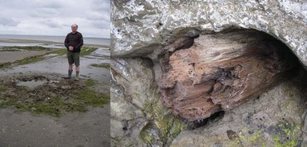 Bruce Hayward and tree trunk preserved under volcanic ash in buried forest